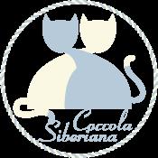 Coccola Siberiana – Allevamento Gatto Siberiano – Buccinasco – Milano Logo